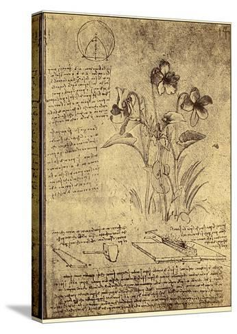 Drawing of Flowers and Diagrams by Leonardo da Vinci-Bettmann-Stretched Canvas Print
