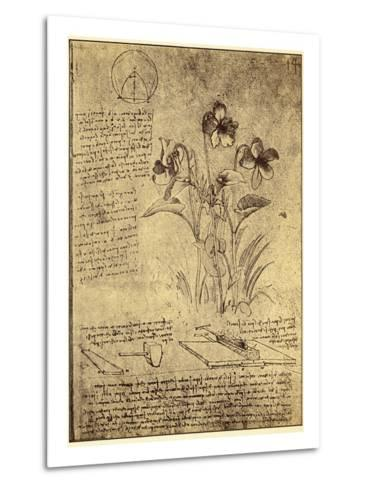 Drawing of Flowers and Diagrams by Leonardo da Vinci-Bettmann-Metal Print