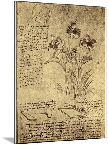 Drawing of Flowers and Diagrams by Leonardo da Vinci-Bettmann-Mounted Giclee Print