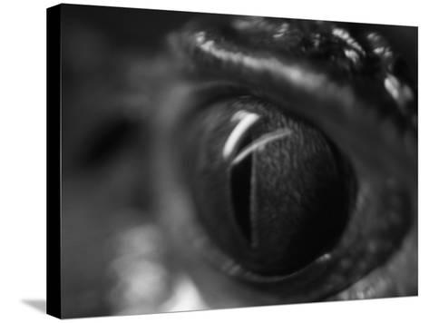 Reptile Eye-Henry Horenstein-Stretched Canvas Print
