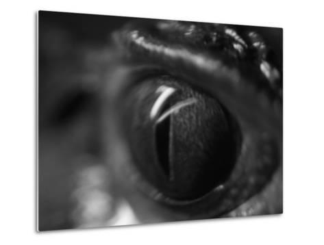 Reptile Eye-Henry Horenstein-Metal Print