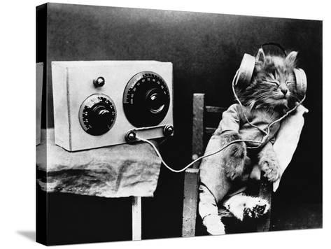 Pet Radio--Stretched Canvas Print