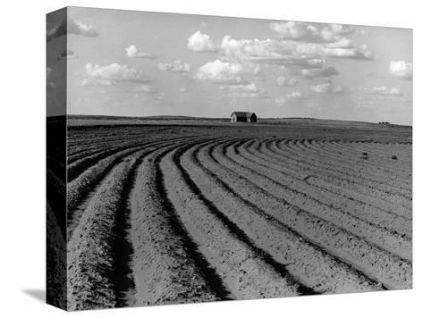Plowed Fields on a Mechanized Cotton Farm--Stretched Canvas Print
