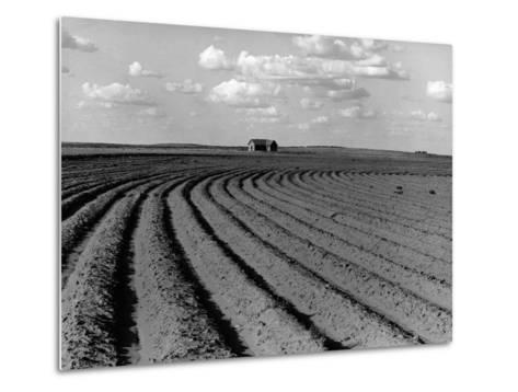 Plowed Fields on a Mechanized Cotton Farm--Metal Print