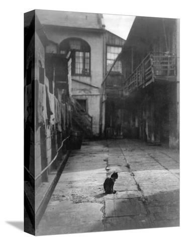 A Cat in a New Orleans Courtyard--Stretched Canvas Print