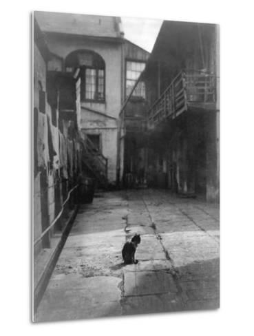 A Cat in a New Orleans Courtyard--Metal Print