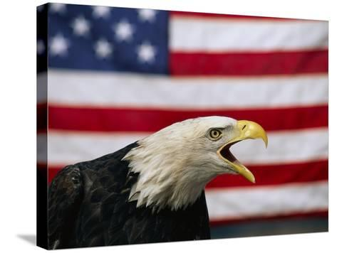 Bald Eagle and American Flag-W^ Perry Conway-Stretched Canvas Print