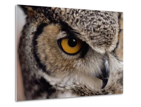 Eye of a Great Horned Owl-W^ Perry Conway-Metal Print