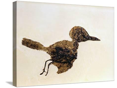 Fossil of Small Bird from Messel Site-Jonathan Blair-Stretched Canvas Print