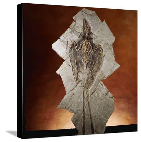Fossil Bird-Layne Kennedy-Stretched Canvas Print
