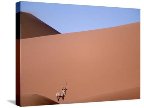 Lone Gemsbok Walking On Sand Dunes-Richard Olivier-Stretched Canvas Print