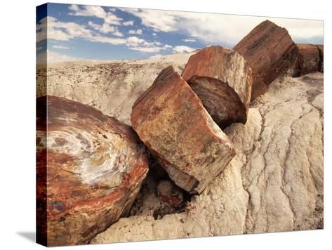 Petrified Logs-Joe McDonald-Stretched Canvas Print
