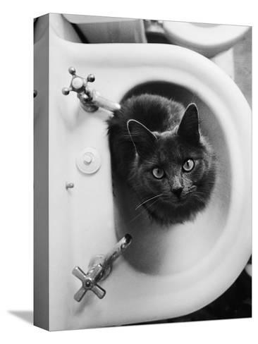 Cat Sitting In Bathroom Sink-Natalie Fobes-Stretched Canvas Print
