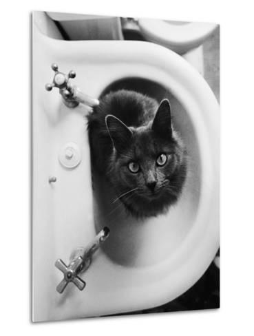 Cat Sitting In Bathroom Sink-Natalie Fobes-Metal Print