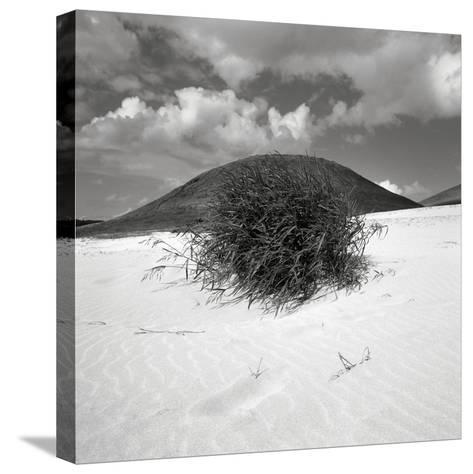 Hills Behind Cluster of Beach Grass--Stretched Canvas Print