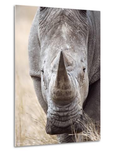 White Rhinoceros--Metal Print
