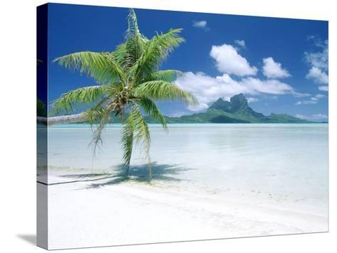 Palm Tree on a Tropical Beach--Stretched Canvas Print