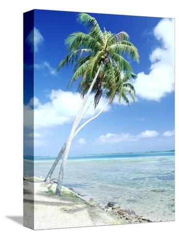 Palm Trees Along Shoreline--Stretched Canvas Print