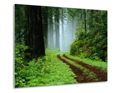 Unpaved Road in Redwoods Forest-Darrell Gulin-Metal Print