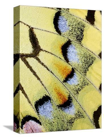 Wing of a Butterfly-Darrell Gulin-Stretched Canvas Print