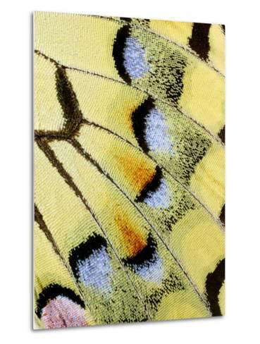 Wing of a Butterfly-Darrell Gulin-Metal Print