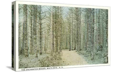 Enchanted Woods, White Mountains, New Hampshire--Stretched Canvas Print