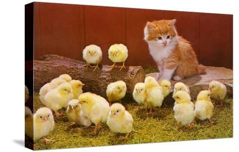 Kitten with Chicks--Stretched Canvas Print