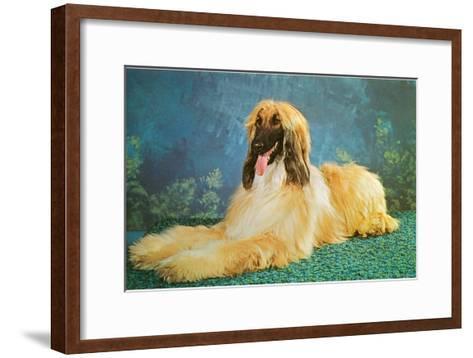Afghan Hound--Framed Art Print