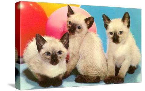 Three Siamese Kittens--Stretched Canvas Print