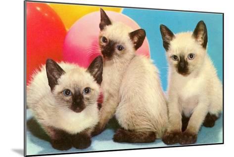 Three Siamese Kittens--Mounted Art Print