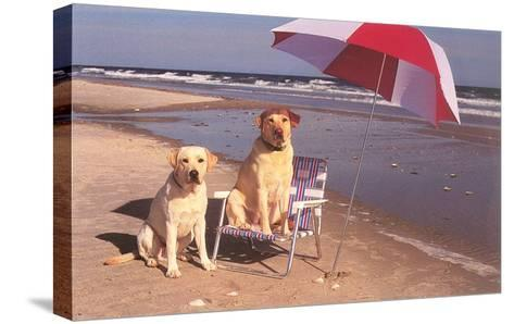 White Labradors at the Beach--Stretched Canvas Print