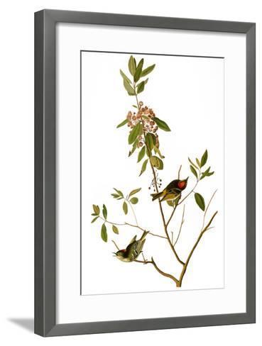 Audubon: Kinglet, 1827-John James Audubon-Framed Art Print
