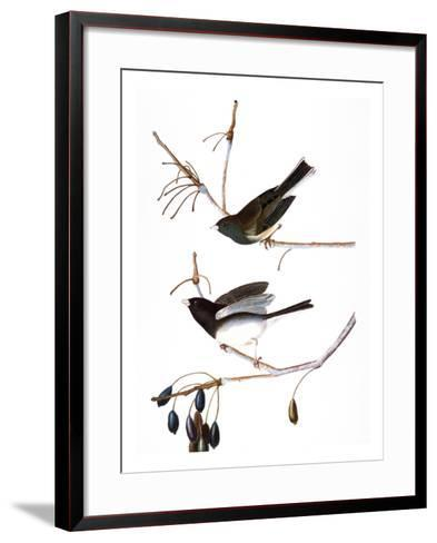 Audubon: Junco, 1827-John James Audubon-Framed Art Print