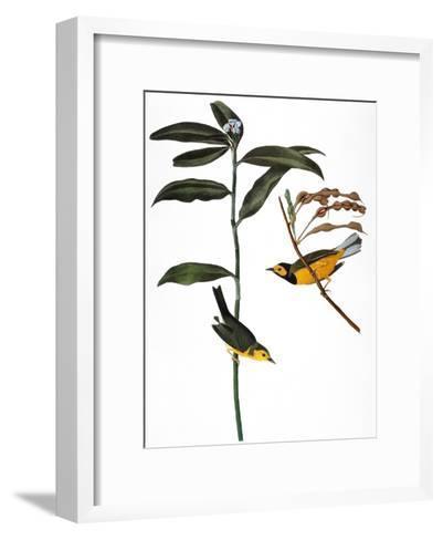 Audubon: Warbler, 1827-John James Audubon-Framed Art Print