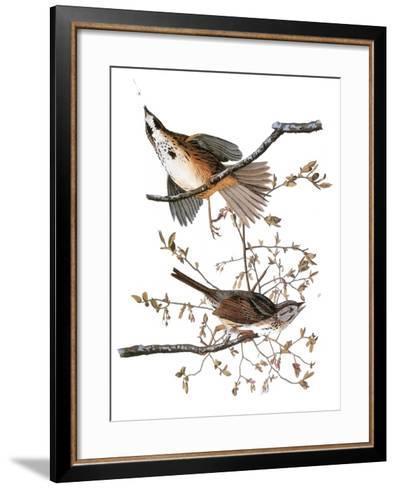 Audubon: Sparrow, 1827-38-John James Audubon-Framed Art Print