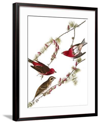 Audubon: Finch, 1827-38-John James Audubon-Framed Art Print