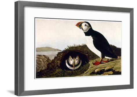 Audubon: Puffin, 1827-38-John James Audubon-Framed Art Print
