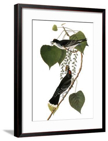 Audubon: Kingbird, 1827-38-John James Audubon-Framed Art Print