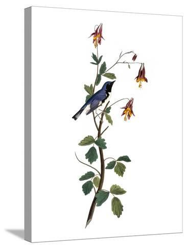 Audubon: Warbler, 1827-38-John James Audubon-Stretched Canvas Print