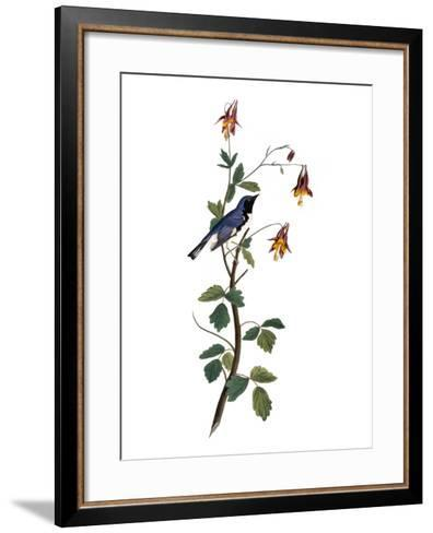 Audubon: Warbler, 1827-38-John James Audubon-Framed Art Print