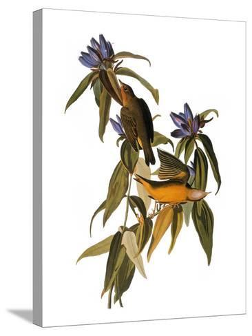 Audubon: Warbler, 1827-38-John James Audubon-Stretched Canvas Print