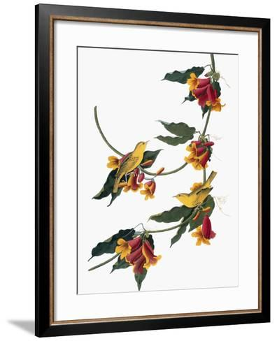 Audubon: Vireo, 1827-38-John James Audubon-Framed Art Print