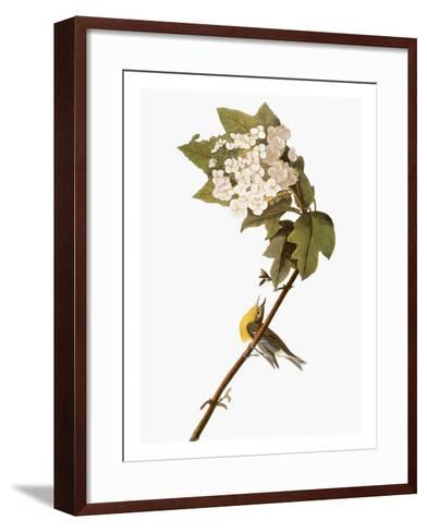 Audubon: Warbler, 1827-38-John James Audubon-Framed Art Print
