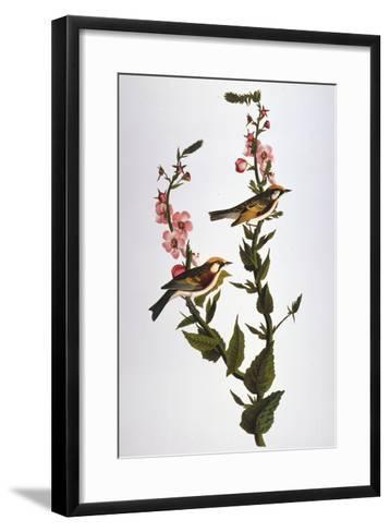 Audubon: Warbler-John James Audubon-Framed Art Print