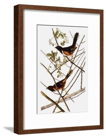 Audubon: Towhee-John James Audubon-Framed Art Print