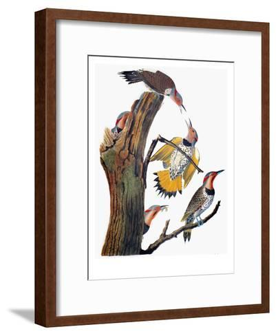 Audubon: Flicker-John James Audubon-Framed Art Print