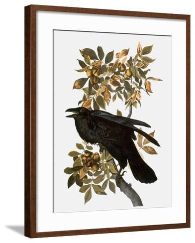 Audubon: Raven-John James Audubon-Framed Art Print