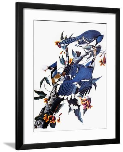 Audubon: Blue Jay-John James Audubon-Framed Art Print