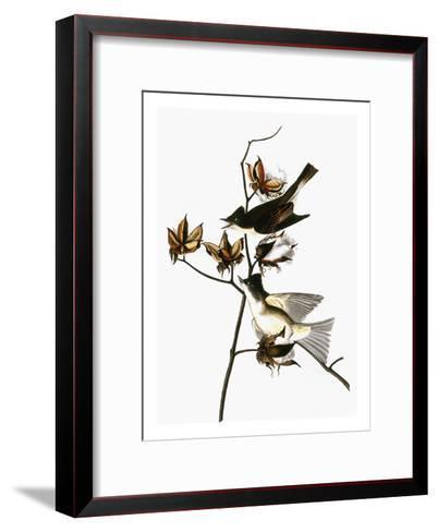 Audubon: Phoebe-John James Audubon-Framed Art Print