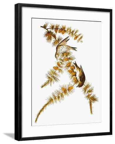 Audubon: Siskin-John James Audubon-Framed Art Print